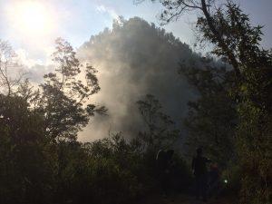 Pemandangan hutan dalam perjalanan menuju sebuah danau di daerah Jawa